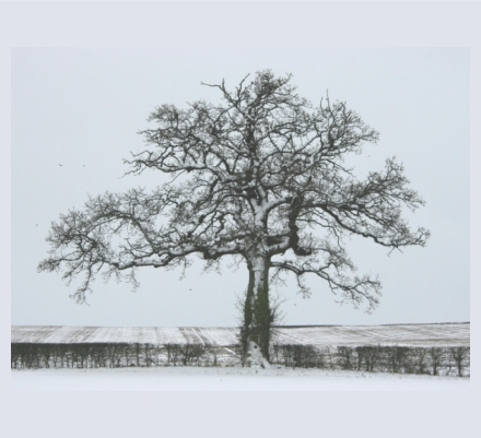 Sue Gutteridge - Photographer based in Taunton, Somerset