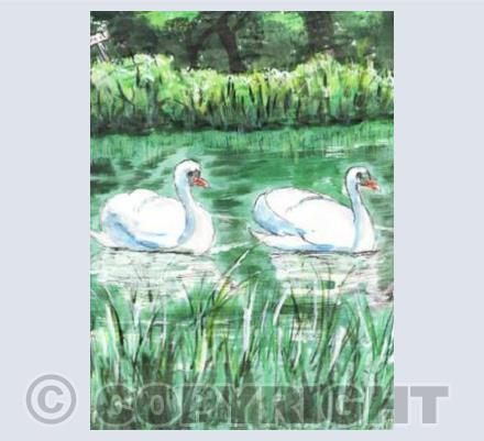 Swans at Denman - By Christine Hounslow