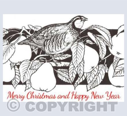 Partridge in a pear tree - by Catherine Ryder
