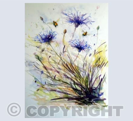 Cornflowers and bees