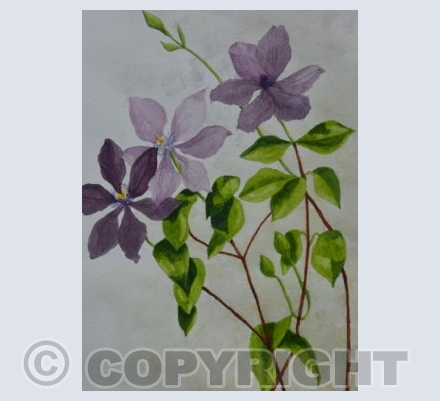 French clematis
