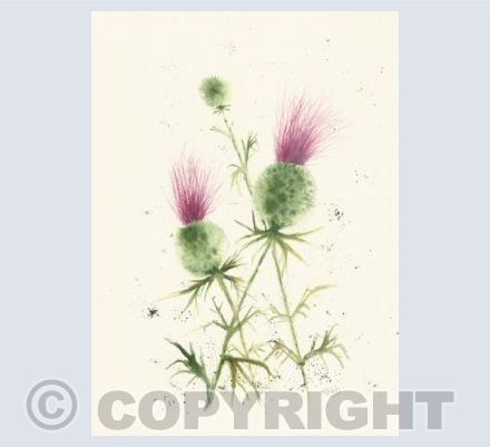 thistles in acrylic ink
