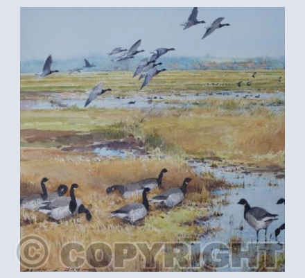 Brent Geese Cley Marshes