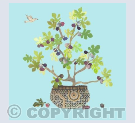 Potted fig