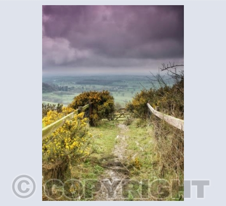 Down The Path, Ibberton Hill, Dorset.