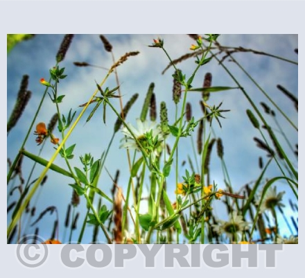 Dorset meadows 2
