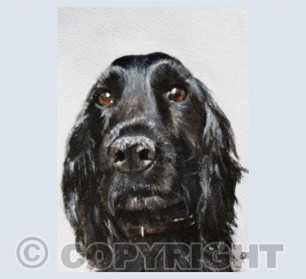 BLACK SPROCKER SPANIEL