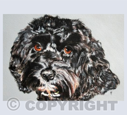 BLACK CAVAPOO