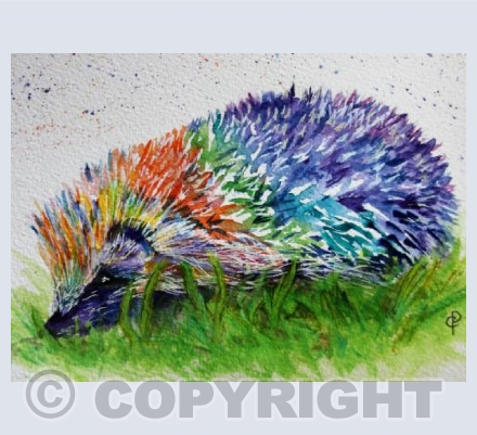RAINBOW HEDGEHOG (2)