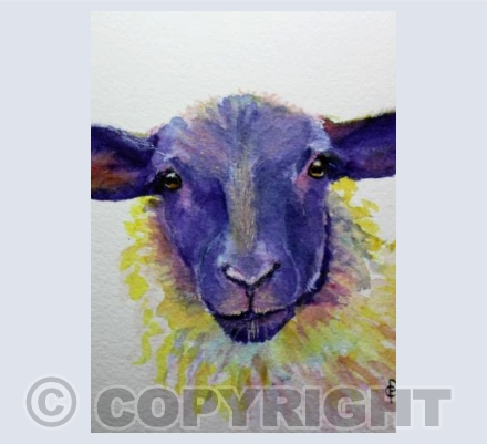 RAINBOW SHEEP (3)