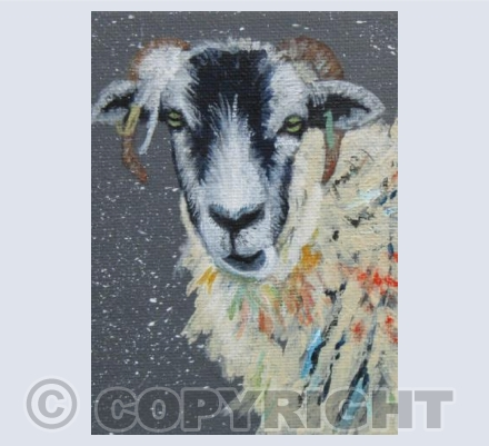 SWALEDALE SHEEP IN WINTER