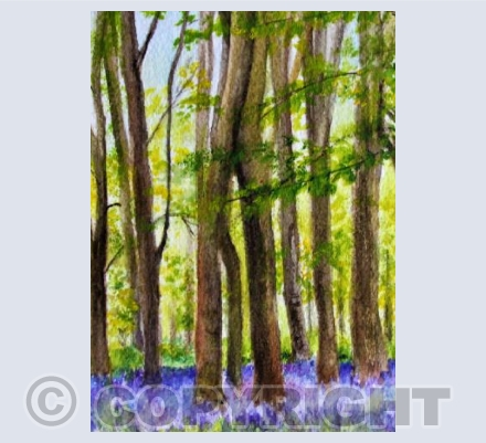 BLUEBELL WOOD (2)