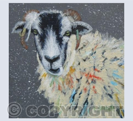 WINTER SWALEDALE SHEEP