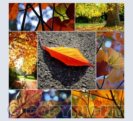 Autumn leaf collage 1