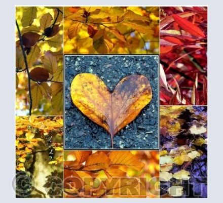 Autumn leaves collage 2