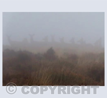 Creatures in the mist