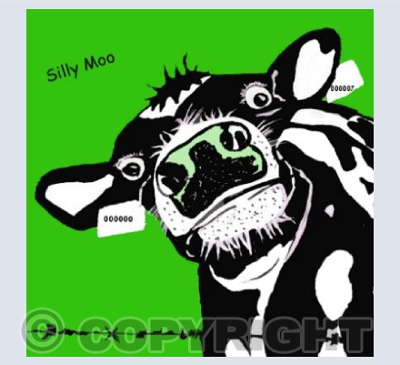 'Silly Moo'