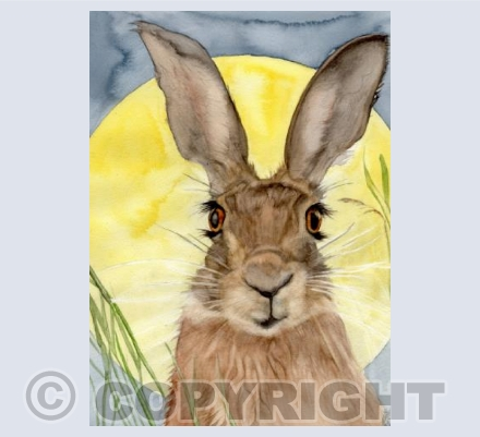 'SUMMERS END HARE'