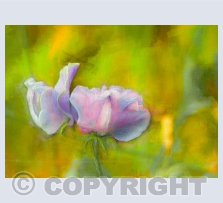 Autumn sweet pea