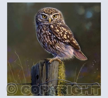 Little Owl Meadow