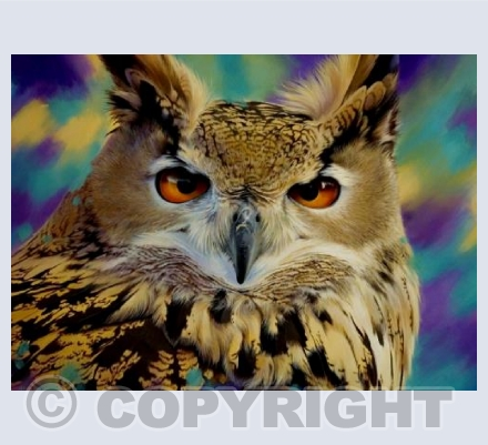 Eagle Owl Gaze