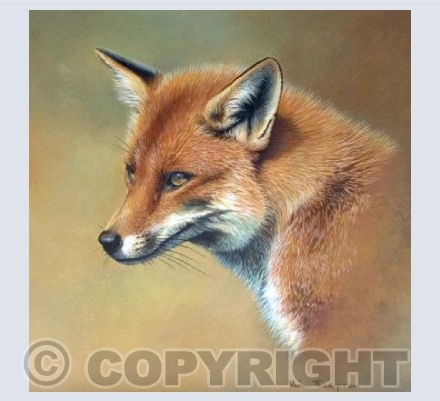 Red Fox- square