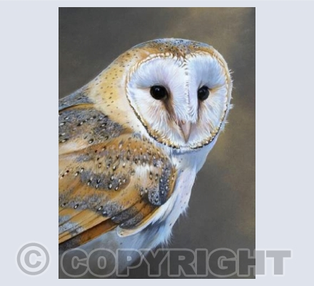 Barn Owl portrait A6