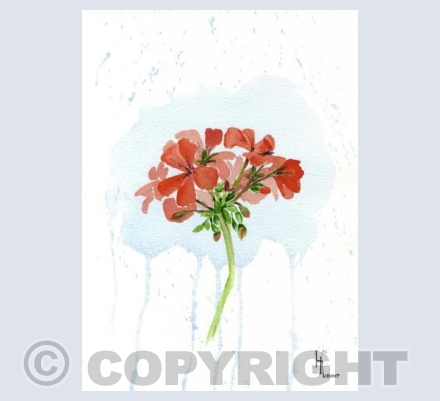 The red geranium