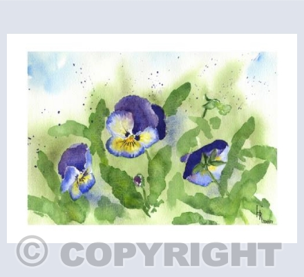 Nodding Pansies