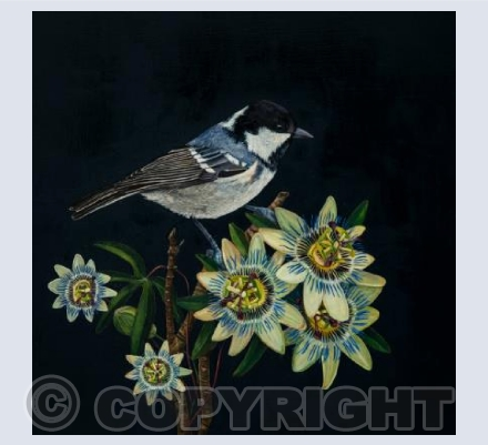 Coal Tit and Passion Flowers