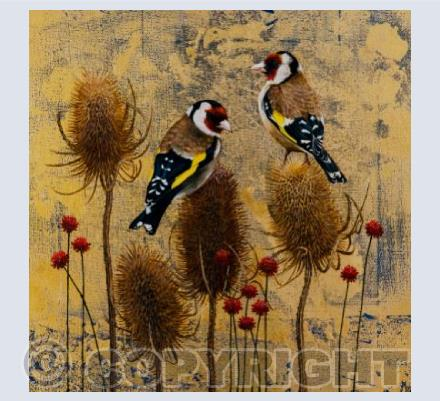 Goldfinch and Teasels