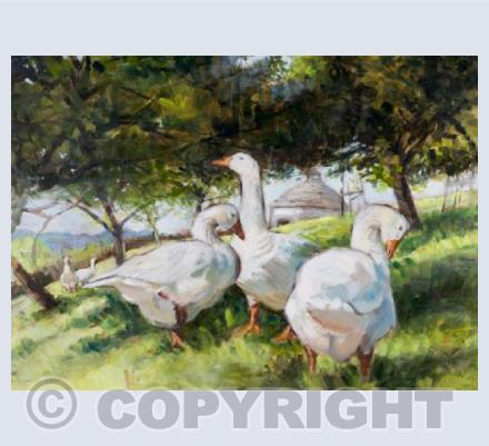 'Orchard geese'