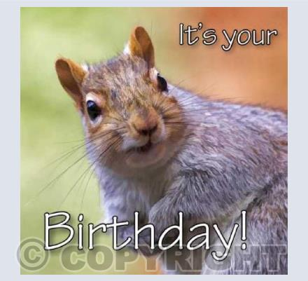 Birthday Squirrel