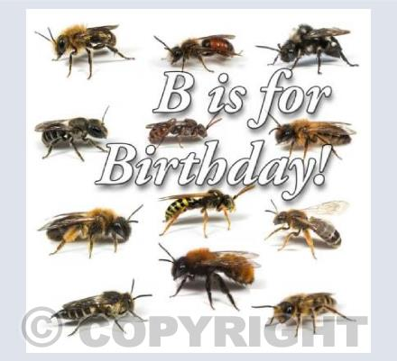 Bee Birthday