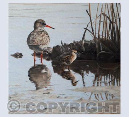 Redshank & chick