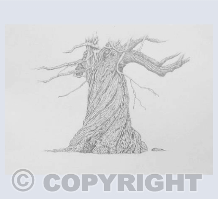 twisted tree drawing