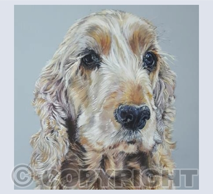 Milly - Golden English Cocker Spaniel