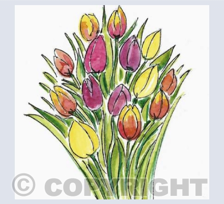 Tulips (multicolour)