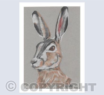 'Cotswold Hare'