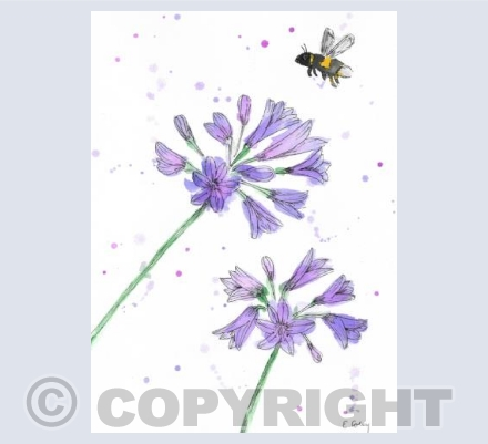 'Agapanthus & Bee'