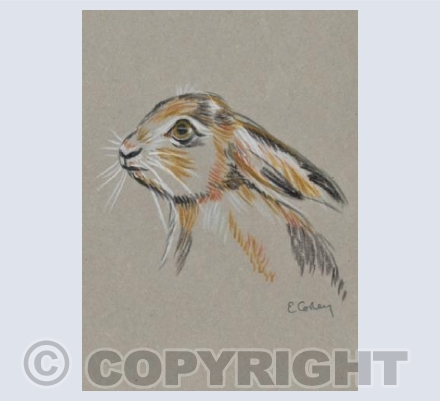 'Little Brown Hare'