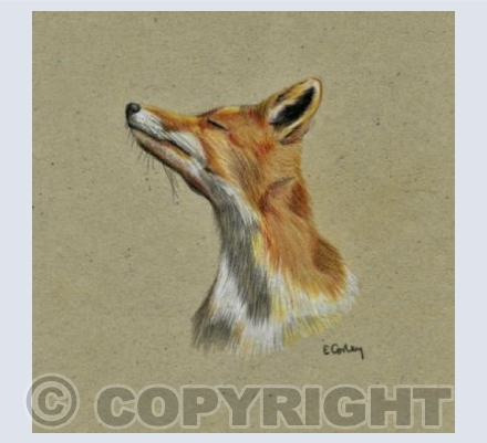 'The Sniffing Fox'