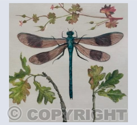Dragonfly and Oak leaves
