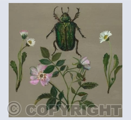 Beetle and wild rose