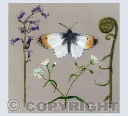 Orange Tip butterfly and Bluebell