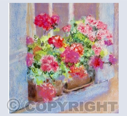 RUBY GERANIUMS IN FRANCE