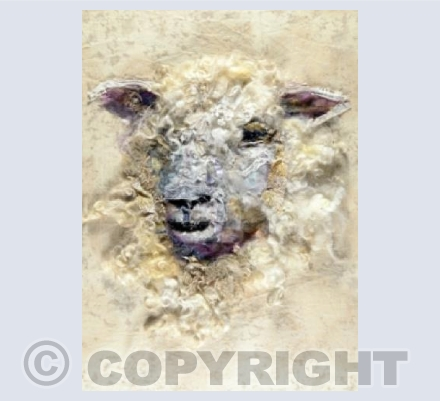 Cotswold Sheep #15