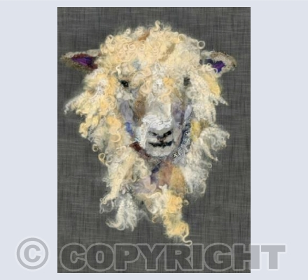 Cotswold Sheep VII