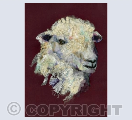 Cotswold Sheep II