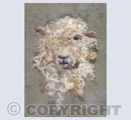 Cotswold Sheep #18